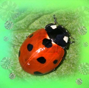 glow-in-the-dark-ladybug-earrings-unique-below-web-S