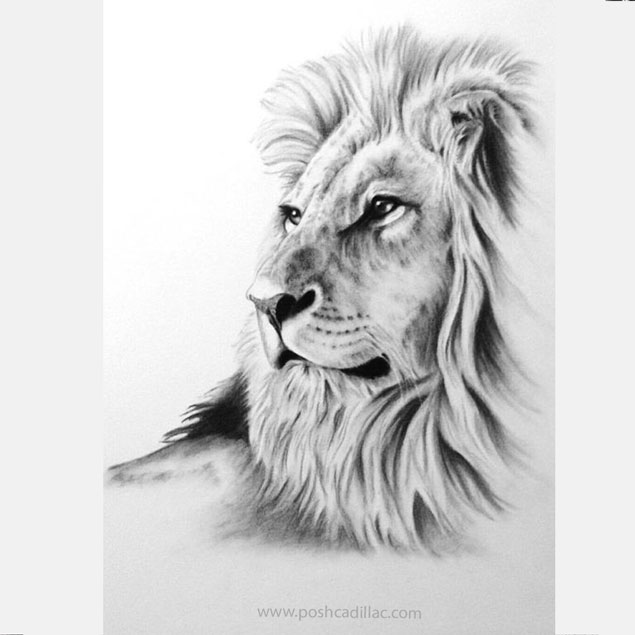 Beautiful Realistic Lonely Lion Glazing Proud Strength
